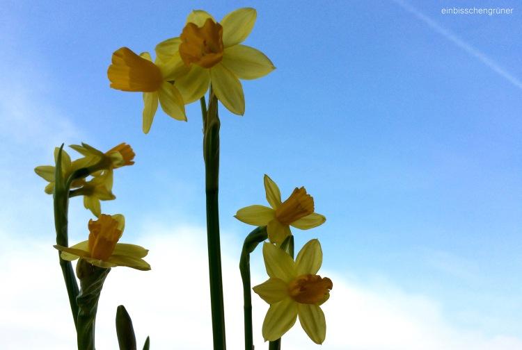 Torffreie Blumenerde schützt die Moore und das Klima