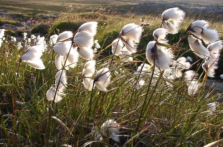 Torffreie Blumenerde trägt zum Moorschutz bei